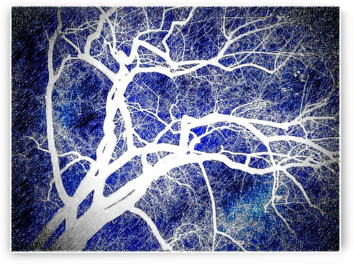 Art Branch of Indigo Blue by Jeremy Lyman