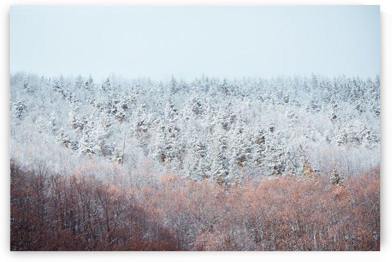 Frozen Carpathian mountains Romania by Adi Daniel Antone
