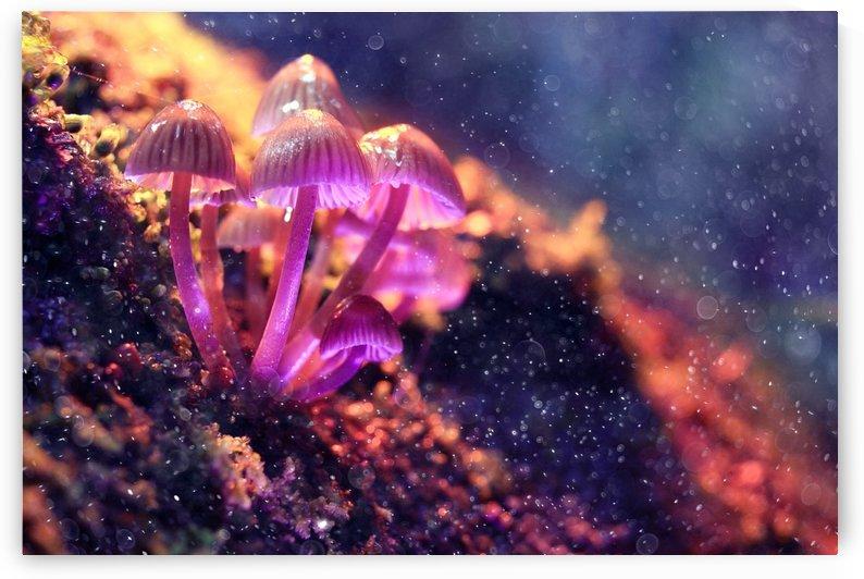 Mushroom Life by LionsJungle420Art
