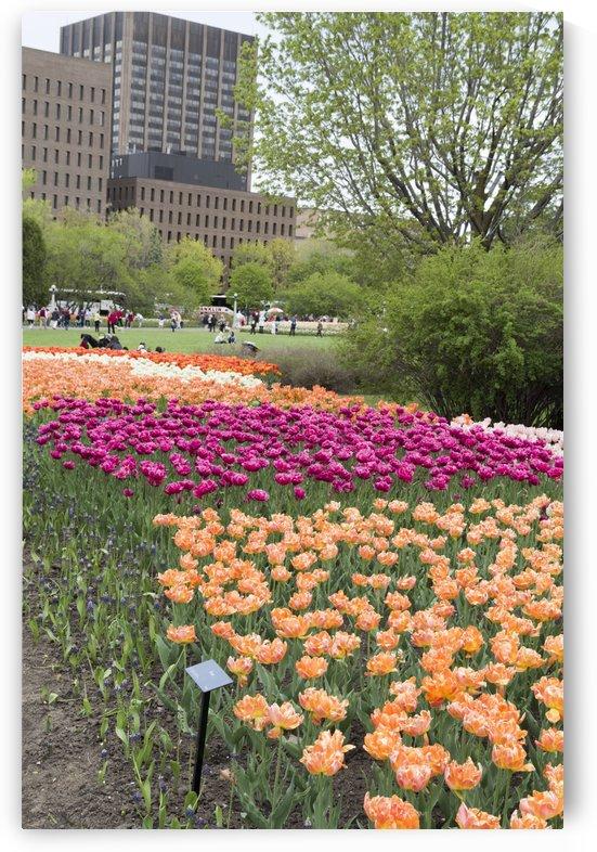 Ottawa Tulip Festival 4 by Bob Corson