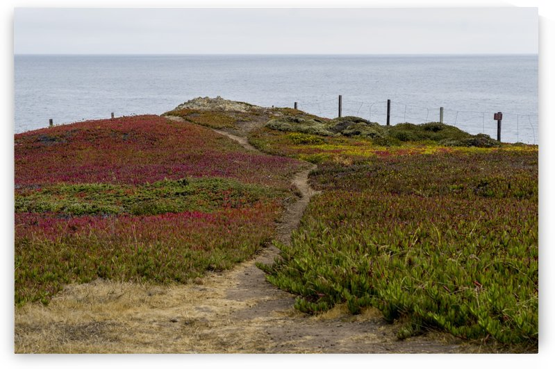 Bodega Bay 7 by Bob Corson