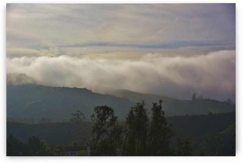 Fog Bank in the Morning III  by Linda Brody