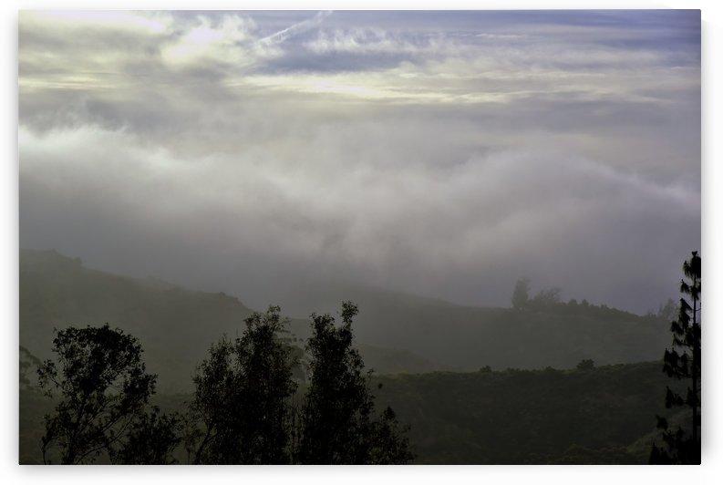 Fog Bank in the Morning II  by Linda Brody