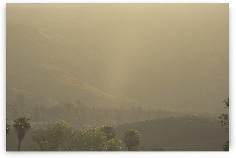 Foggy Morning by Linda Brody