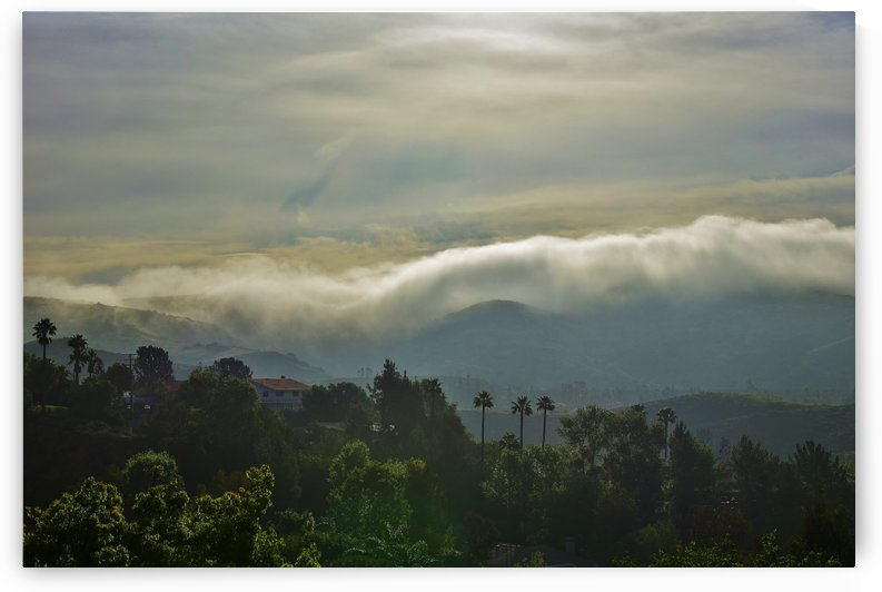 Fog Bank in the Morning IV  by Linda Brody