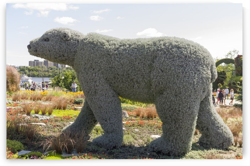 Manitoba entry: The polar Bear by Bob Corson