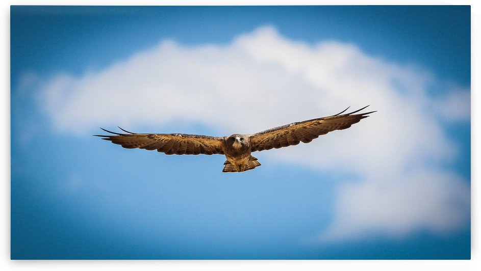 Hawks by bostermiller