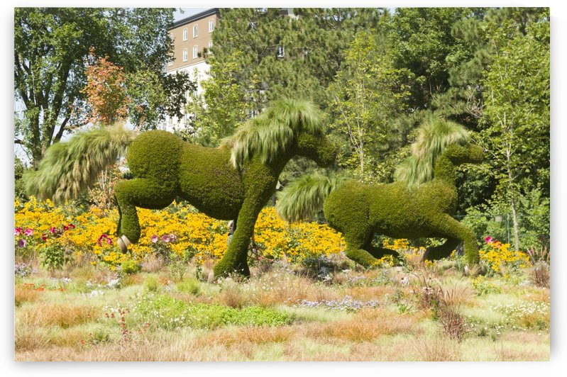 MosaïCanada 150 Display of horses 1 by Bob Corson