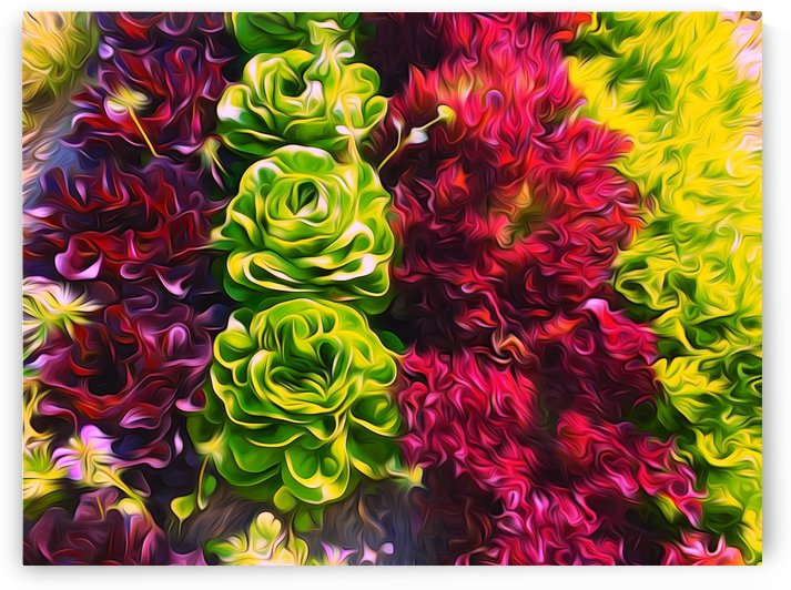 Lettuces by Impression Of Things