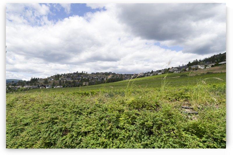 Winery in Kelowna hills 1 by Bob Corson