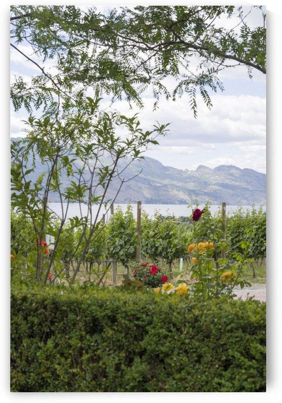 Peeking at Lake Okanagan by Bob Corson