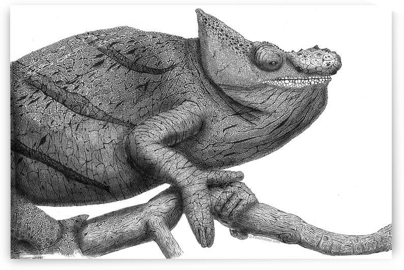 Cavalier Chameleon by P2