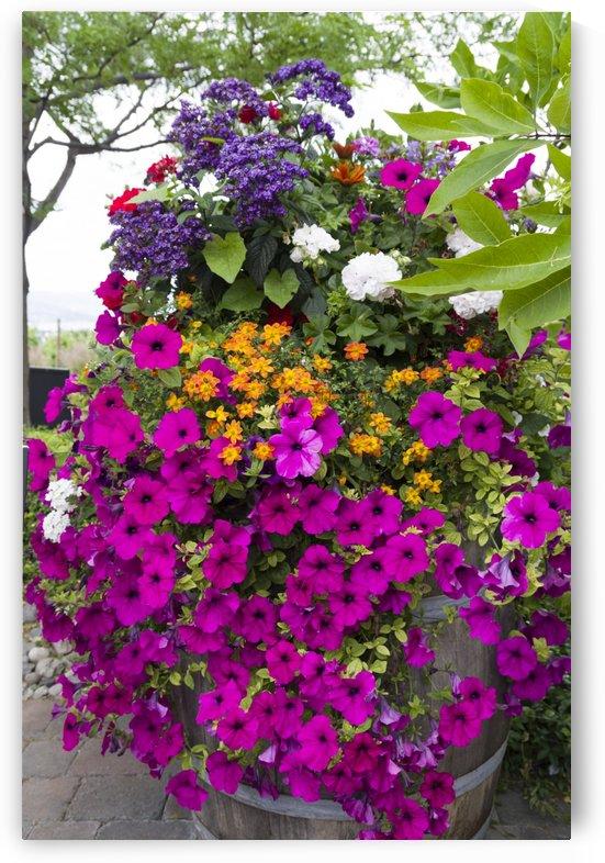 Pretty pot of flowers on a patio by Bob Corson