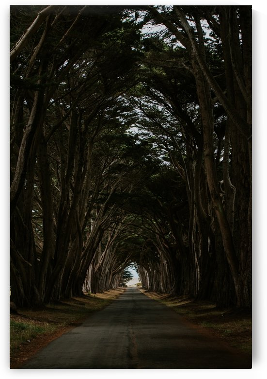 Cypress Tree Tunnel California by StephanieAllard