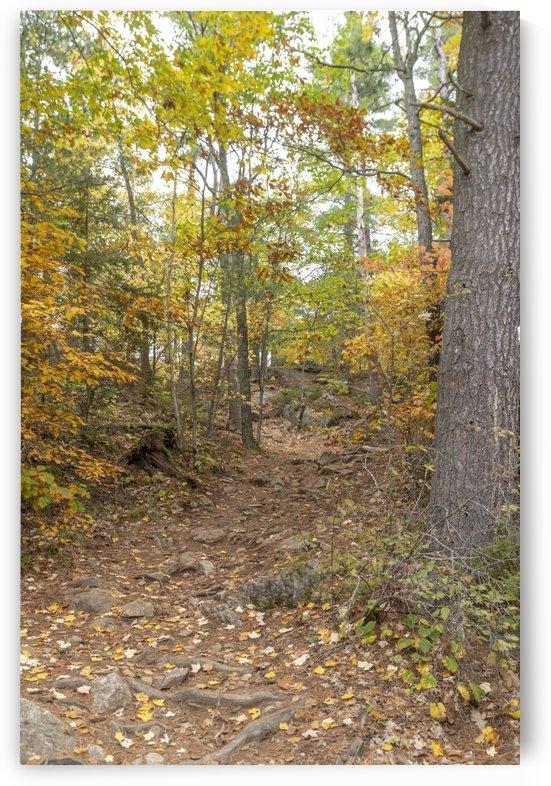 Eagle Nest Trail 5 by Bob Corson