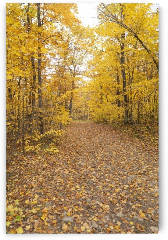 Eagle Nest Trail 1 by Bob Corson