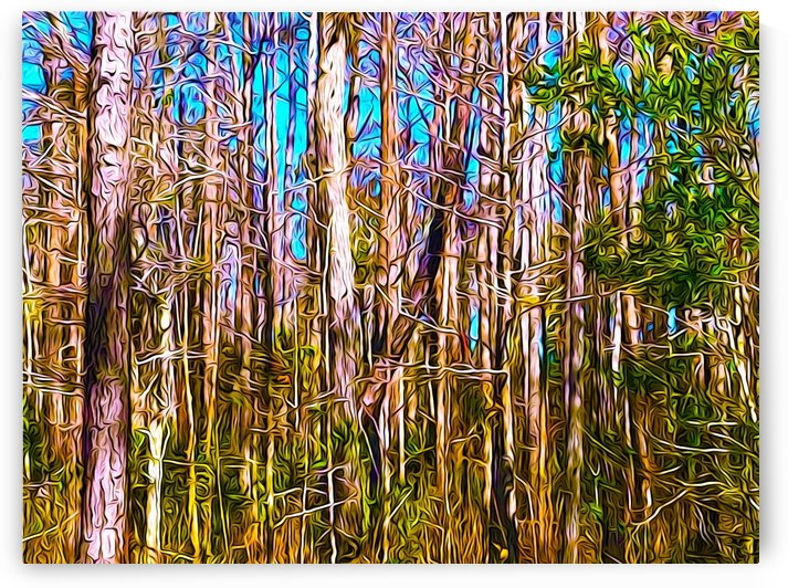 Florida Trees by Impression Of Things