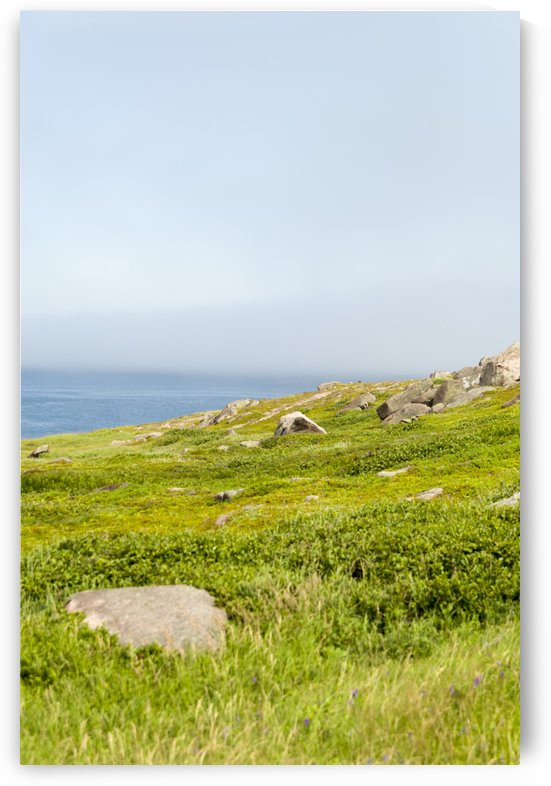 View from Cape Spear Walking trails  by Bob Corson