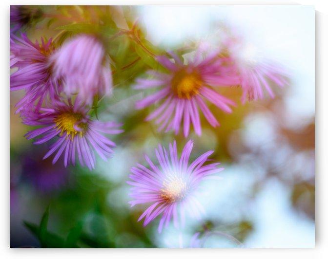 Fleur et ciel by Ian Gagné