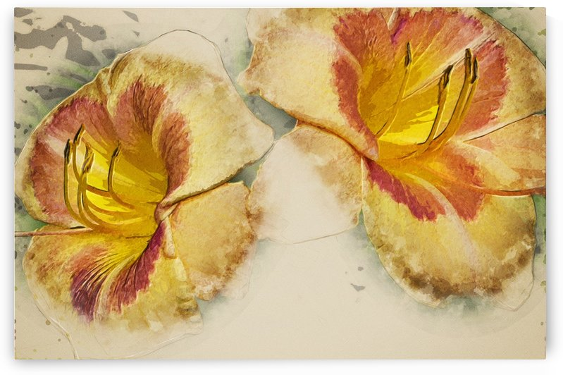 Multicoloured day lily 3 digitally painted by Bob Corson