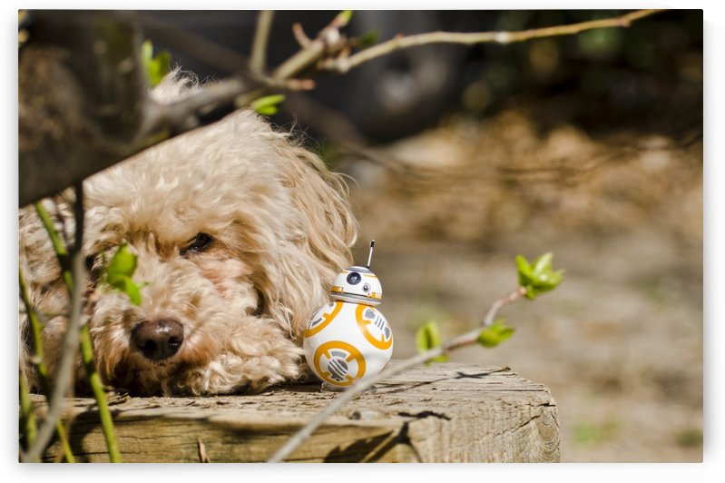 BB8 and Dog by Juvelyn Green