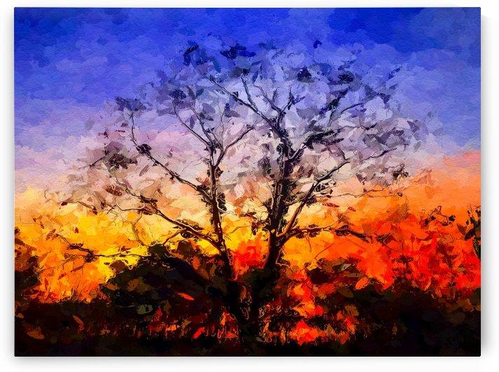 Sunrise Silhouette  by Ricky A Richardson