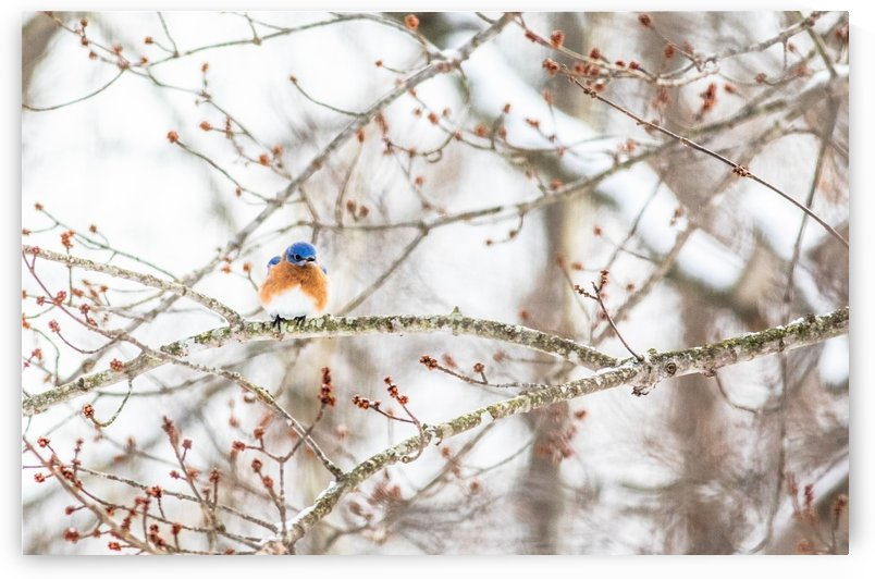 Waiting for Spring by Megan Ratts Photography