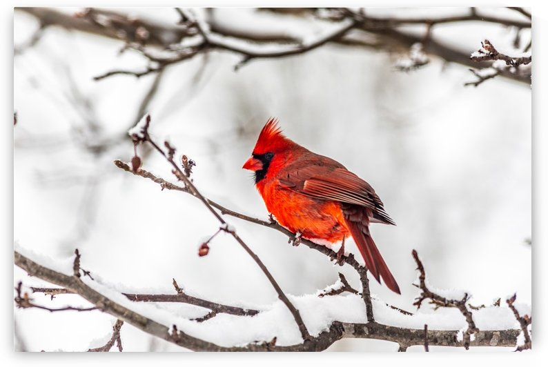 Red in White by Megan Ratts Photography