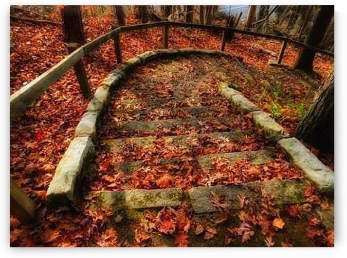 Fall by Jody B