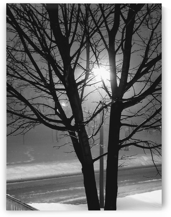 February fog by Wendy A Rohn