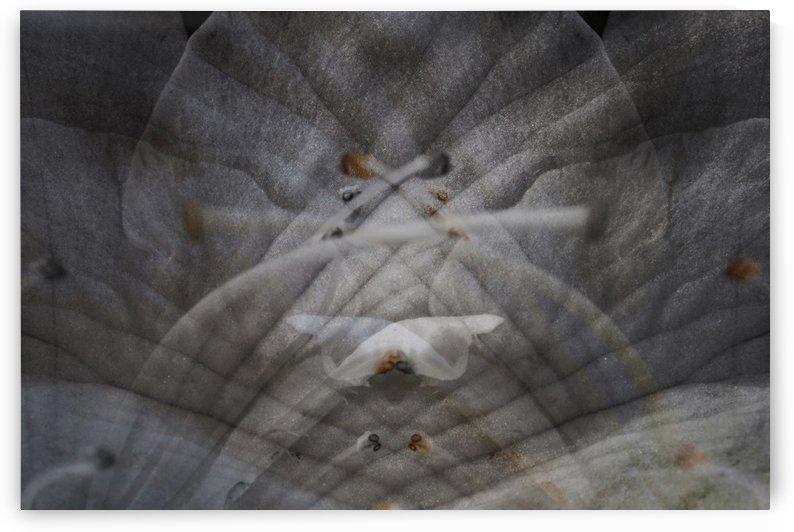 Azalea double exposure abstract by PedroVit
