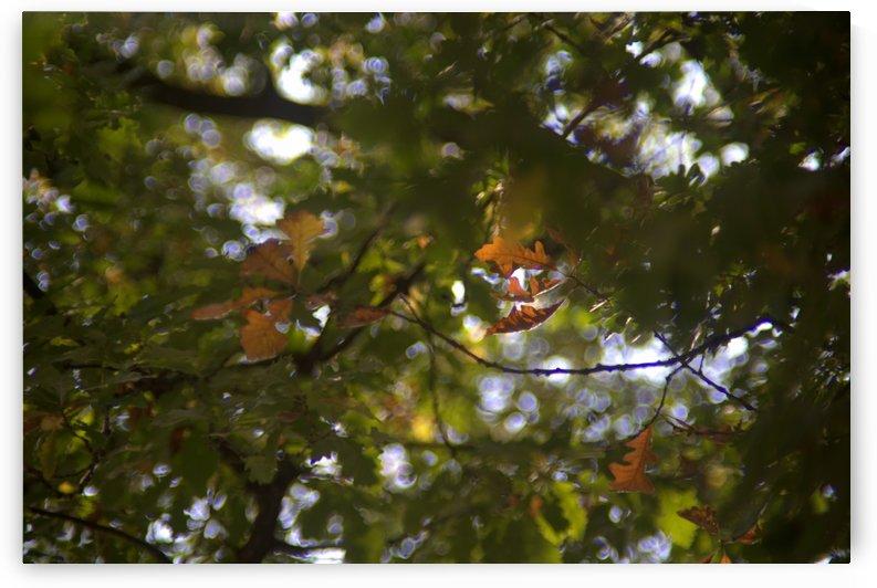 automne 3 by M S SoFar