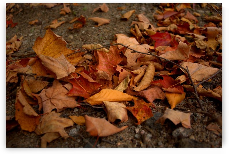 automne 4 by M S SoFar