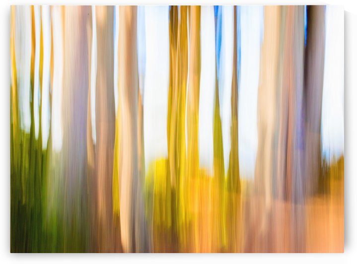 Moving Trees 25 Landcape 52 70 200px by Gene Norris