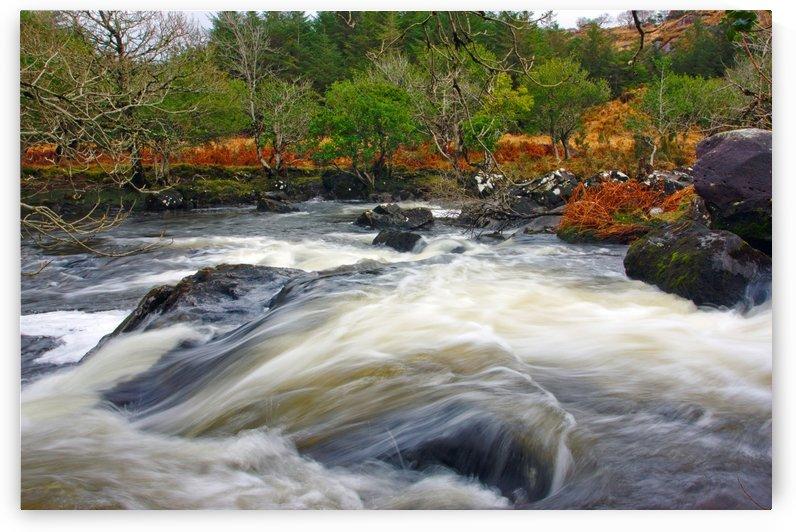L0021  Killarney National Park,Co.Kerry, Ireland_1549587438.55 by Michael Walsh