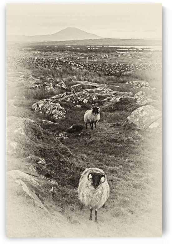 G 081 Connemara by Michael Walsh