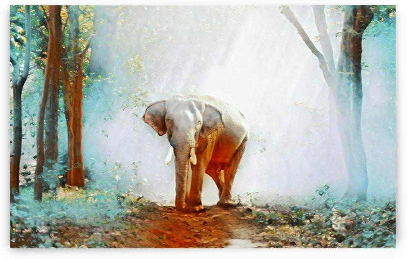 White ELA by Mitul Prajapati