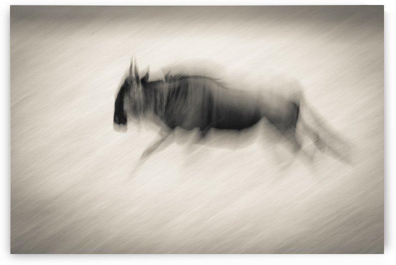 Ghost of Mara North - B&W by JADUPONT PHOTO