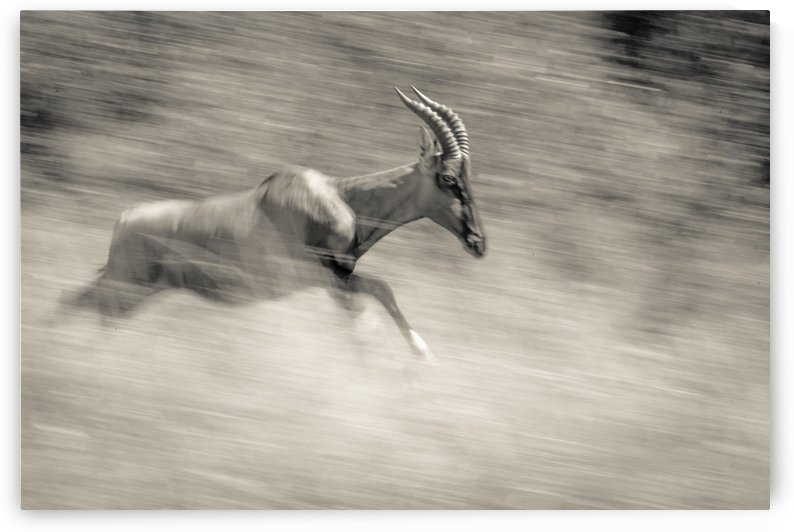 Full Speed by JADUPONT PHOTO