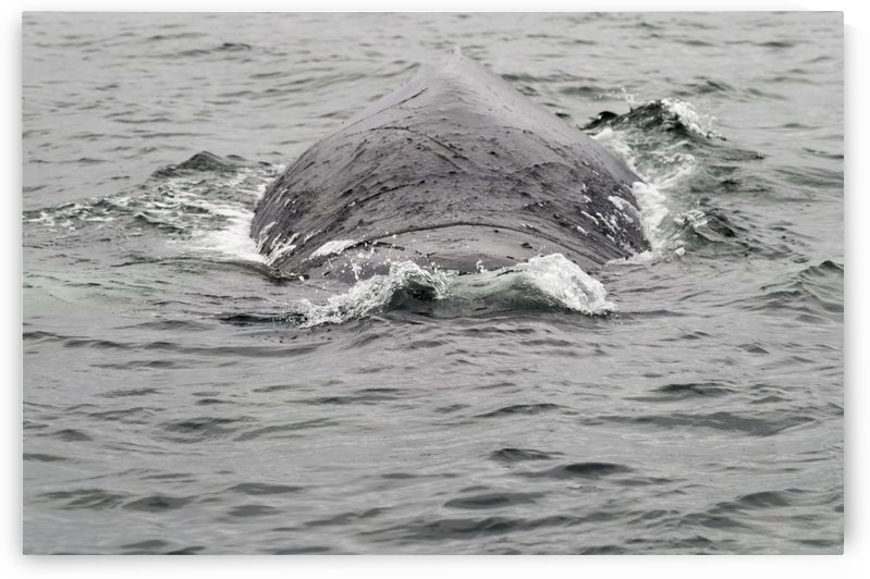 Whale Ho by Bob Corson