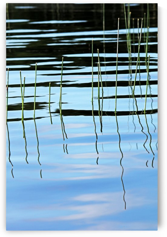Reeds In The Shallows Abstract by Deb Oppermann