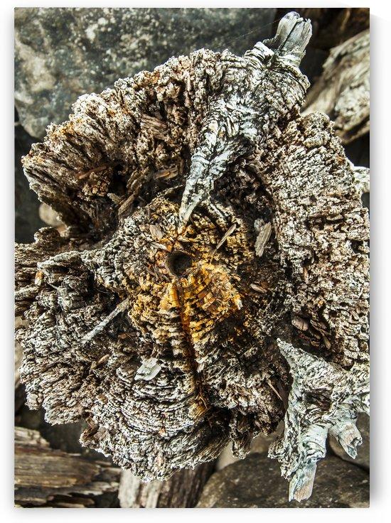 Shore pile 5 by olando lin