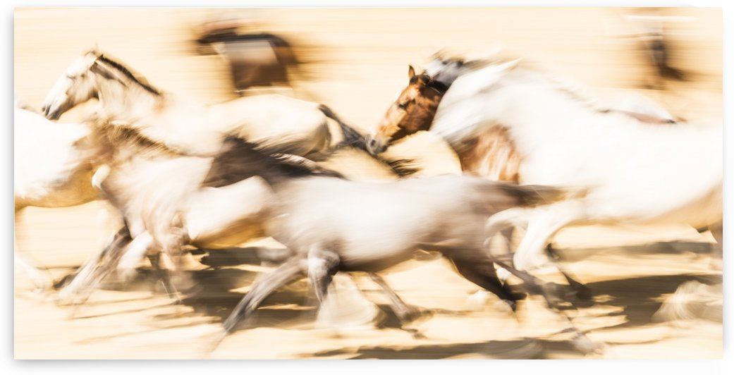 SPANISH HORSES by ANDREW LEVER GALLERY