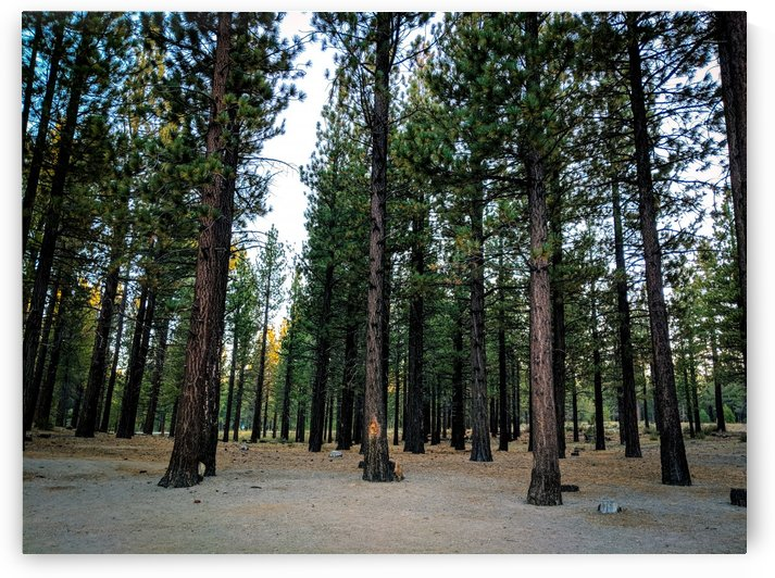 Quiet Thoughts in a Forest by Tom Nolle
