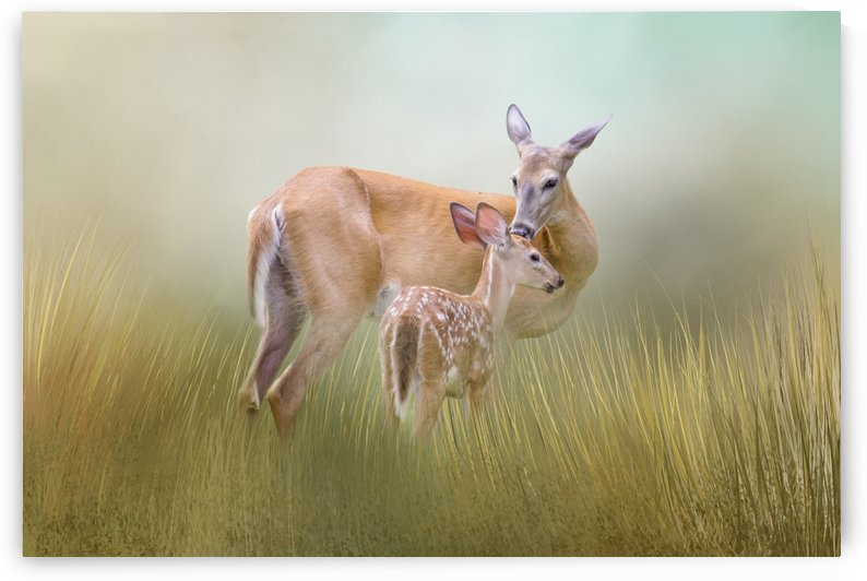 Parental Love by Michel Soucy