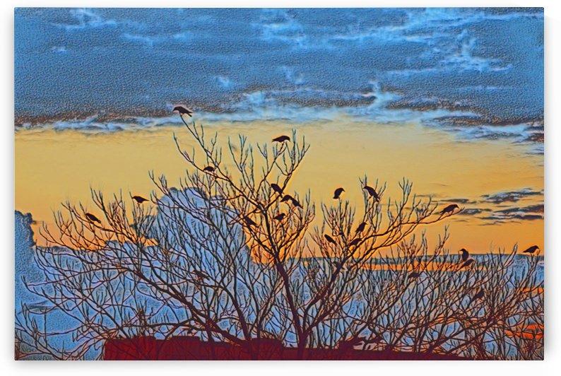 Birds on Sunset by Lavi