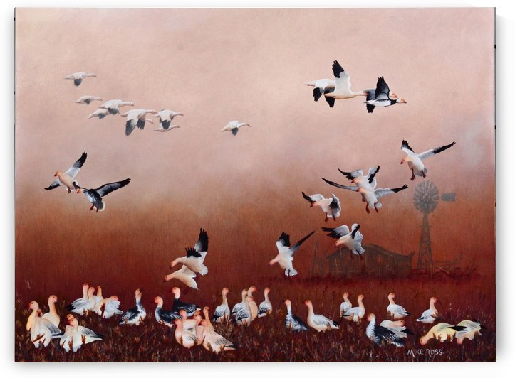 Snow Geese by Mike Ross