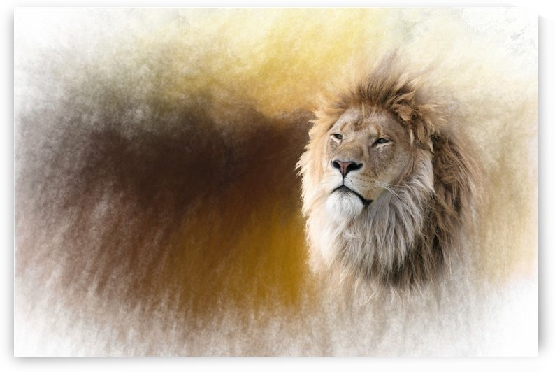 The King by Michel Soucy