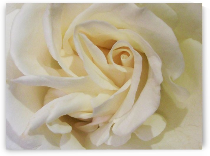 Soft Ivory Layers In Rose by Linda Peglau