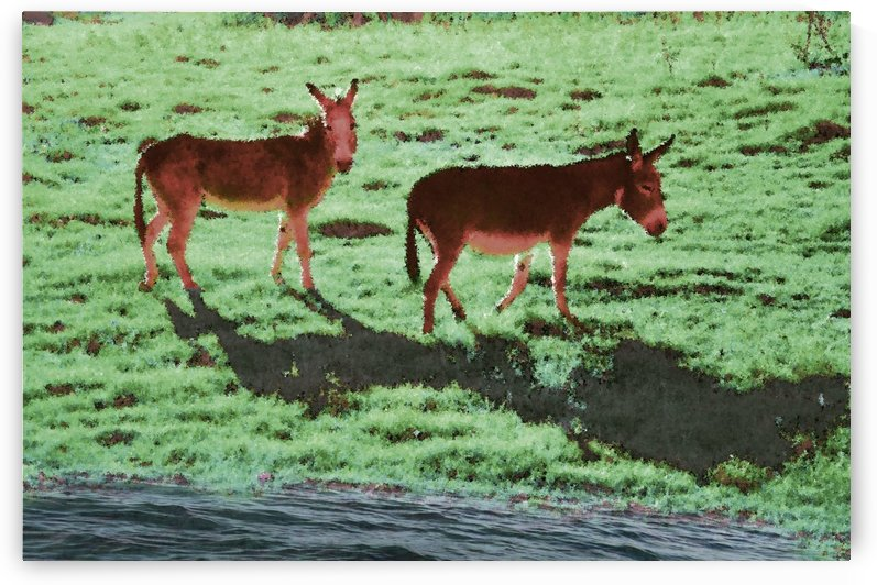 Two Donkeys by Ann Ciarico